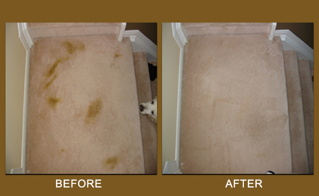 Pet Stains Removed From Carpet Modesto CA
